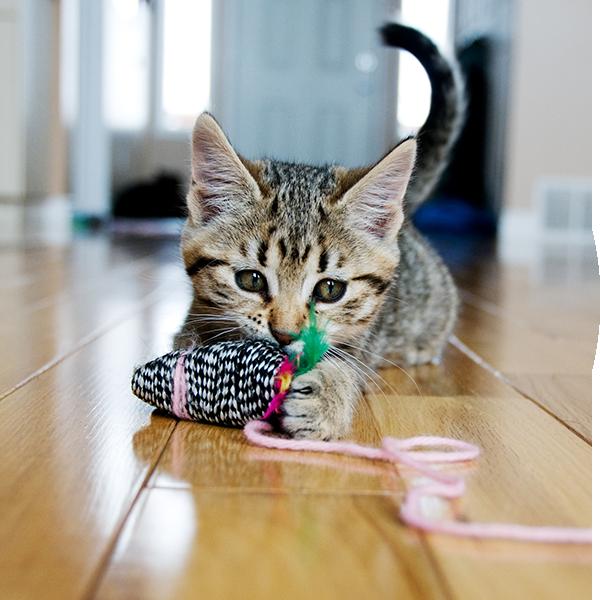Bubble-Katze-Spielzeug