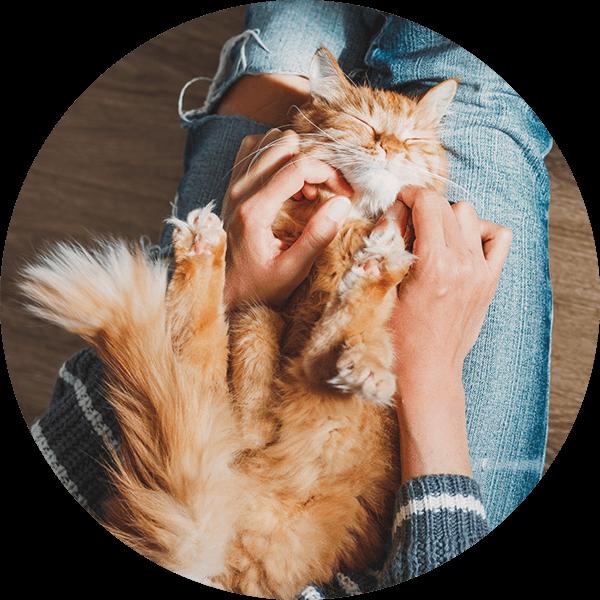 Pets deli Katze Kuscheln