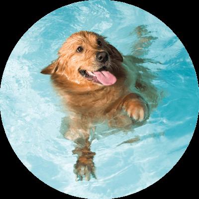 bubble-pool