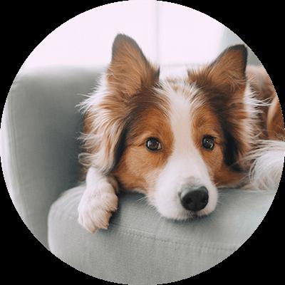 bubble-hund-sofa