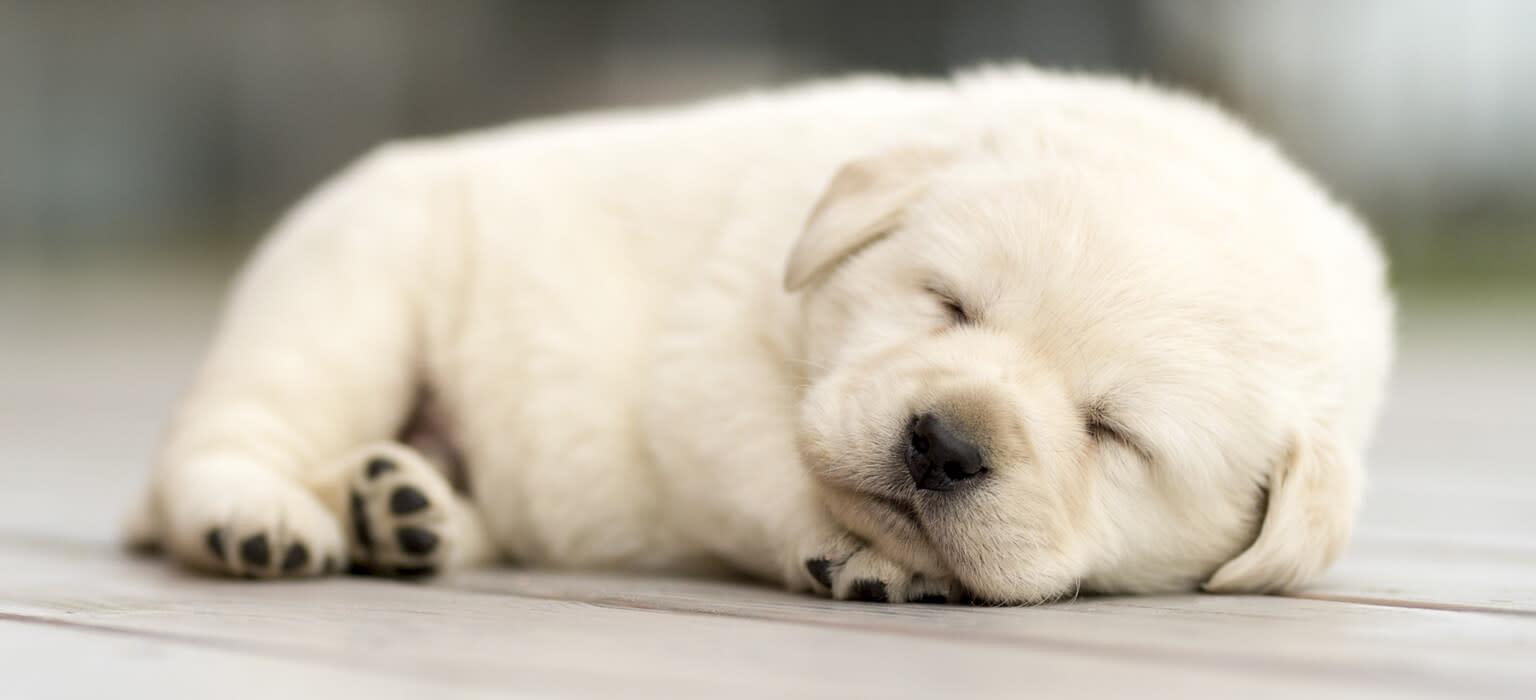 210526 LP Header Mobile Puppy Sleeping