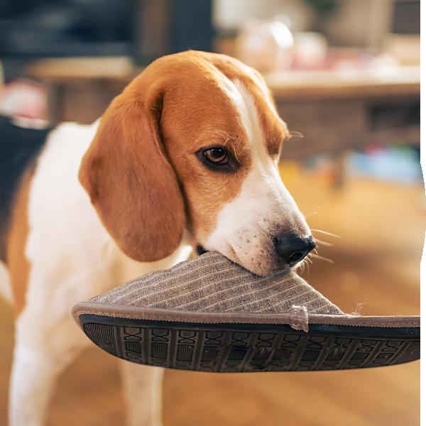 Bubble-Hund-Schuh