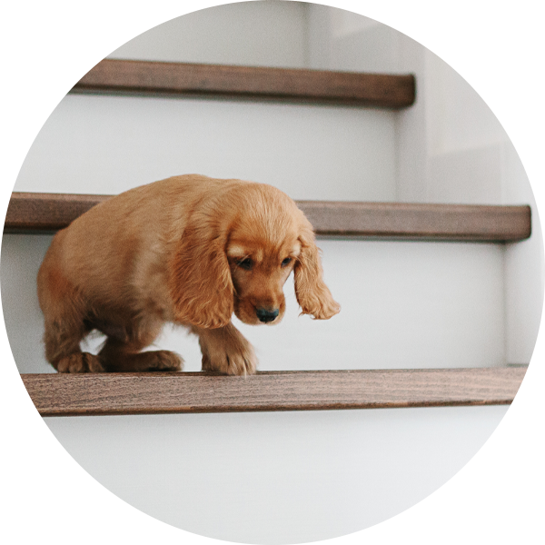 210526 LP Bubble Puppy Stairs