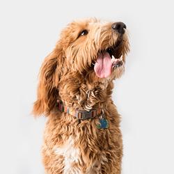 Freudiger Hund