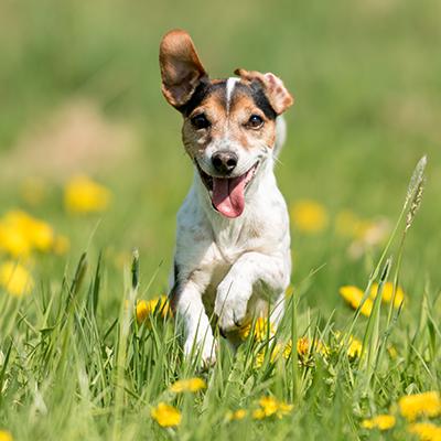 Corona Sind Dein Hund Oder Deine Katze Jetzt Gefahrdet Pets Deli