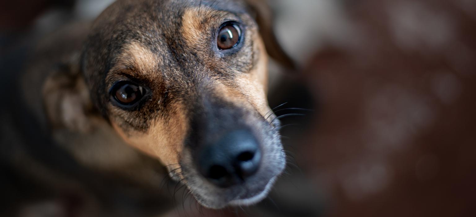 trauriger hund corona-mobile