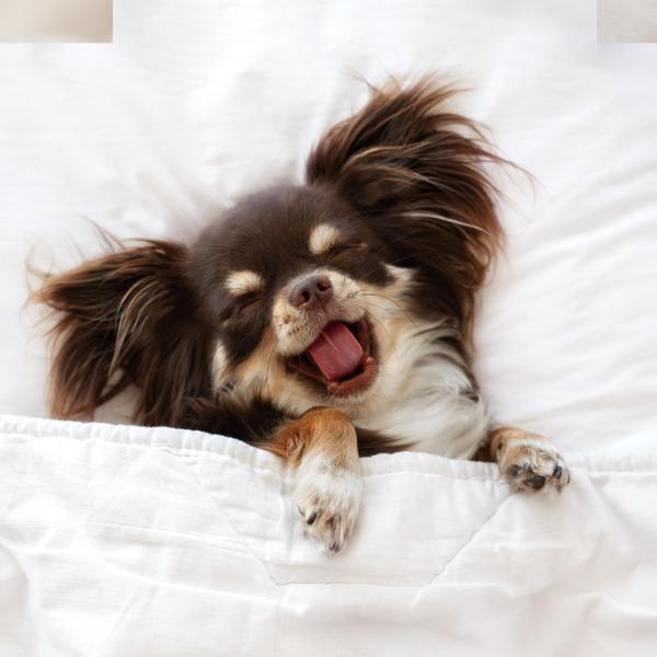 210526 LP Bubble Puppy Sleeping