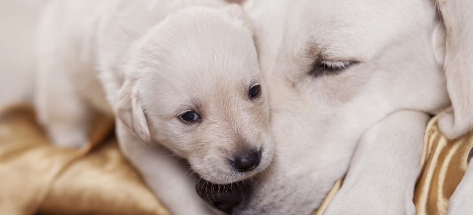 210526 LP Header Mobile Puppy with Dog 02