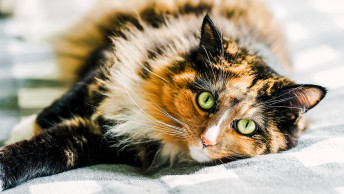 Reasons Why You Should Spay Your Cat