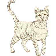 NOW-FRESH-Product-Illustration-Cat-Adult