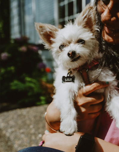 NOW-FRESH-Homepage-Small-white-dog-Lily-in-her-dog-mom's-arms