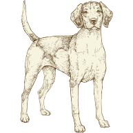 NOW-FRESH-Product-Illustration-Dog-All-Sizes-Adult