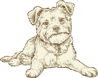 NF Illustration SB Senior Dog 72ppi
