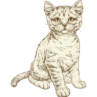 NOW-FRESH-Product-Illustration-Cat-Kitten