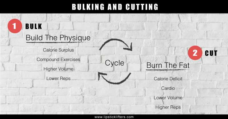Bulking And Cutting For Women