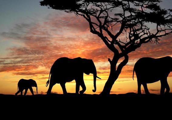 Jack Dorsey eyes African market