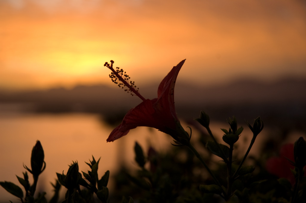 Flower at sunset - Egypt - Honeymoon