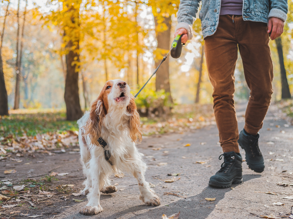 How to Manage Leash Reactivity In Your Dog