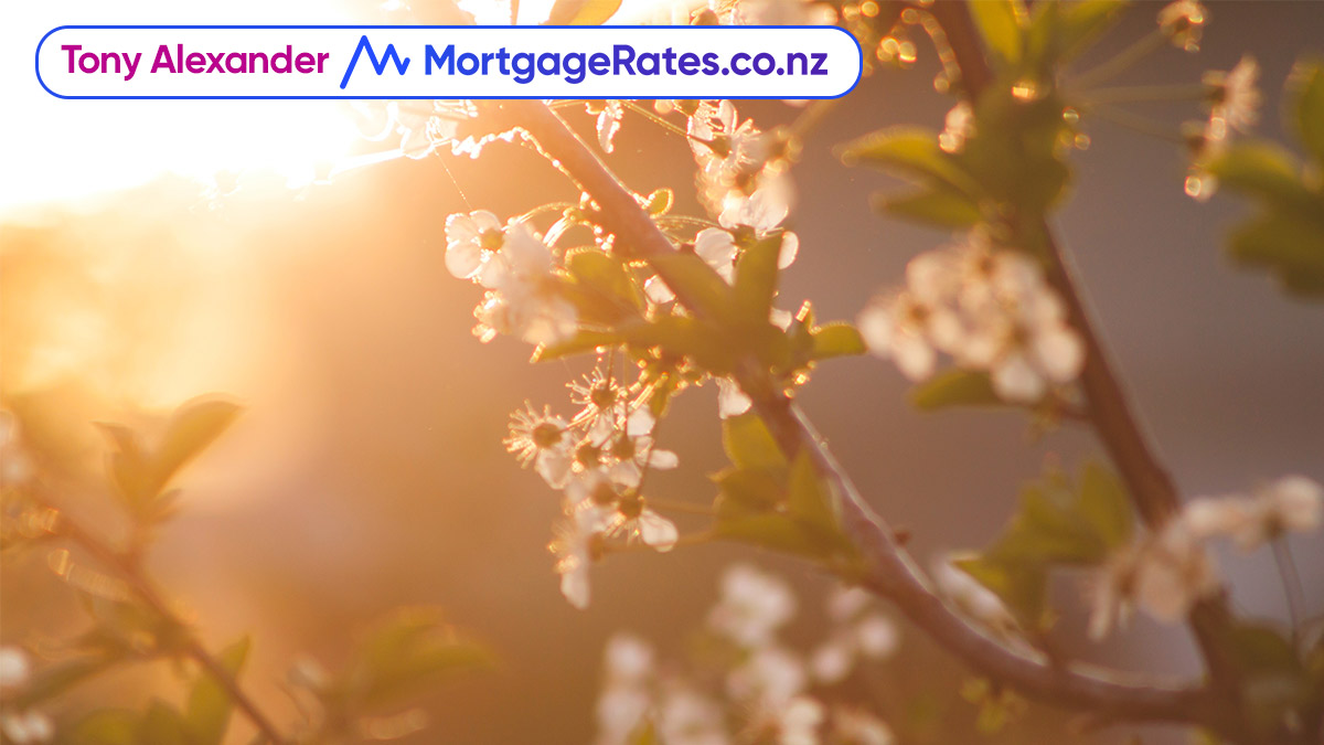 Tony Alexander and Mortgage Rates logo, tree flowers blossoming with sunset in the background