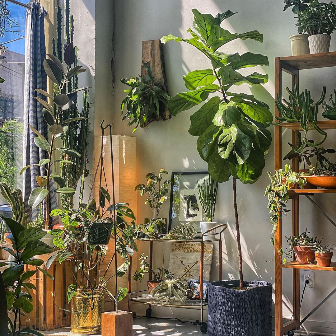 A guide to caring for happy house plants