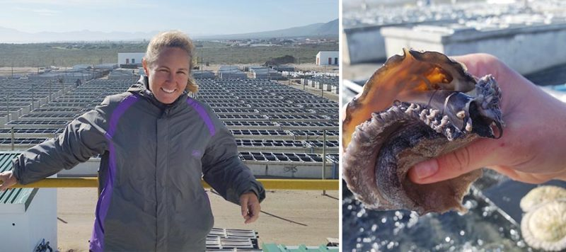 abalone shell fish farm aquaculture south africa