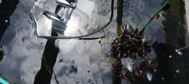 underwater drone mussel farming inspection