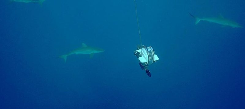 shark week dtg2 rov underwater drone