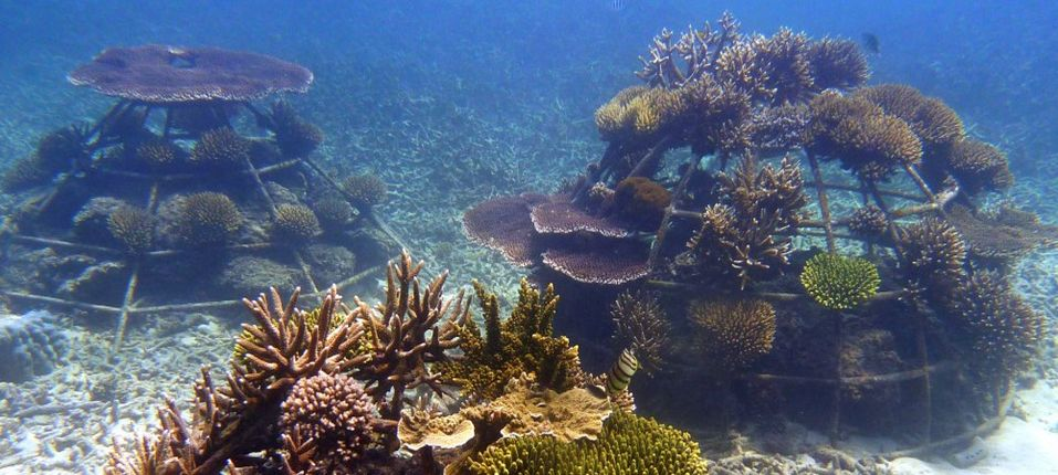 Artificial Coral Reef Sustainable Practices