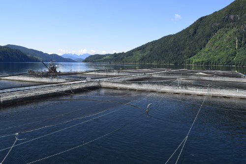 Marine Harvest Farm
