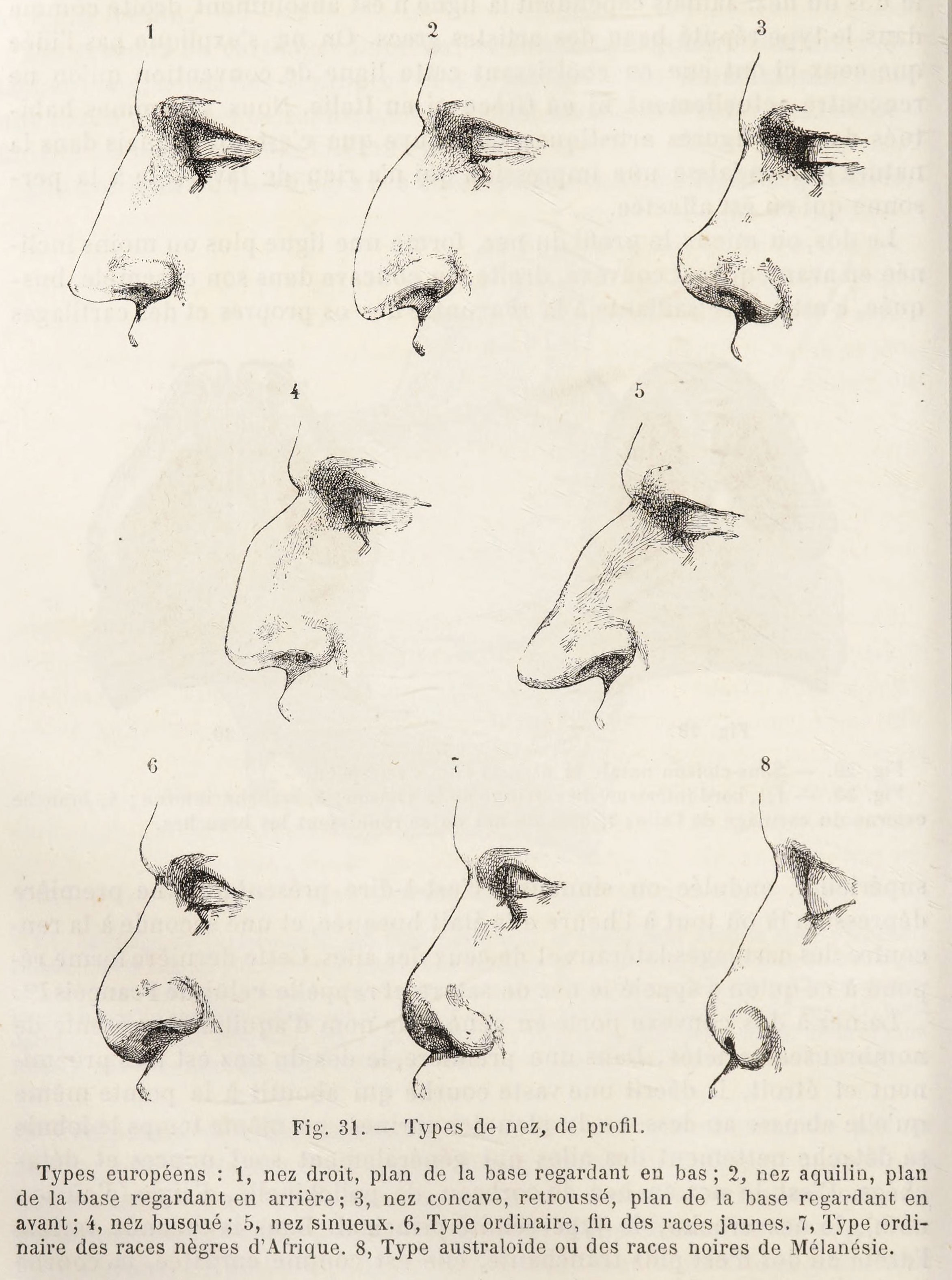 The nasal index, developed by Paul Topinard. (Paul Topinard)