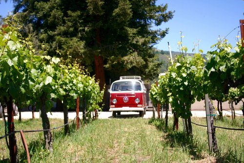 Lillie Vw Bus/ Kombi in Napa on tour with West Wine Tours