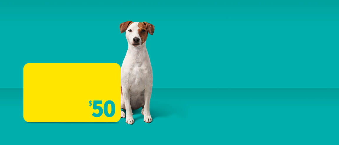 Get a $50 Prepaid Card with select Fido Home Internet packages