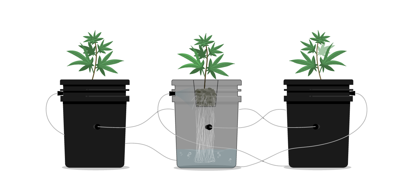 Aeroponics Graphic