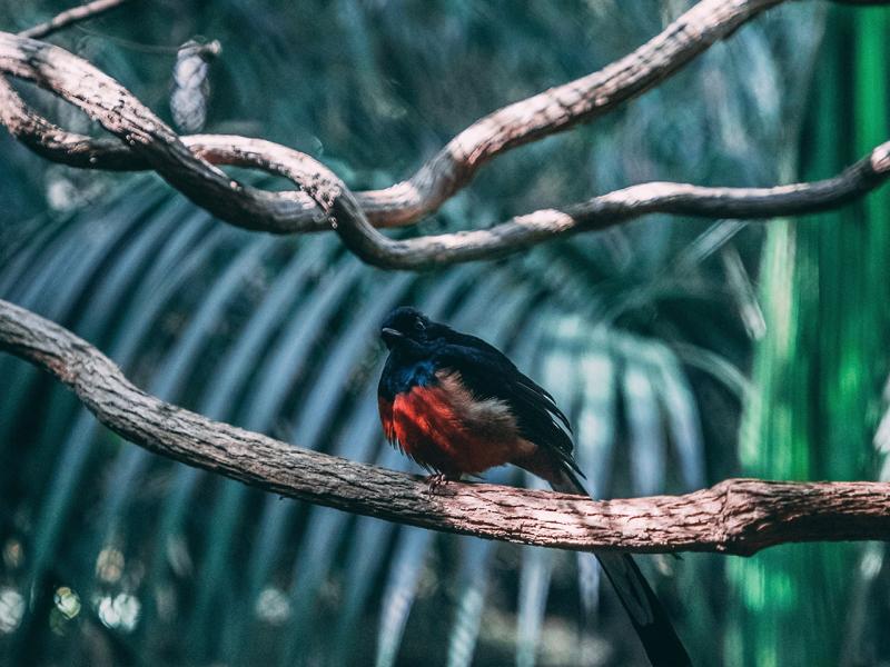 Exotischer Vogel auf einem Ast