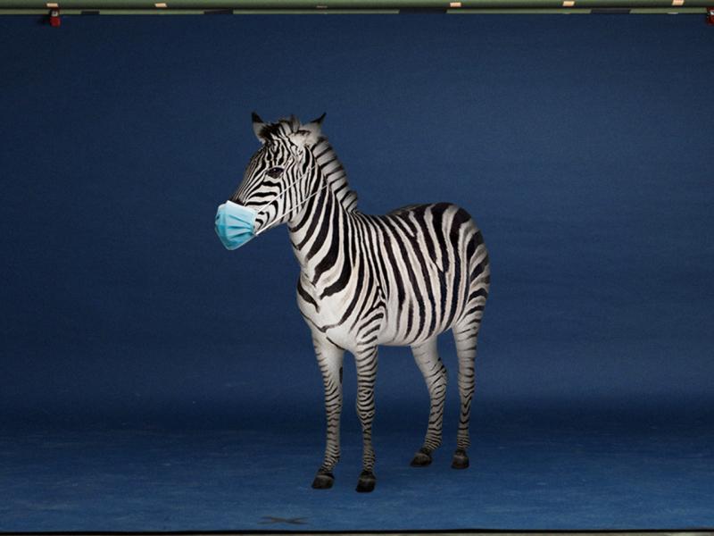 Zebra mit Op-Maske