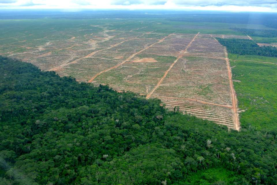AP investigation uncovers sexual abuse in palm oil industry