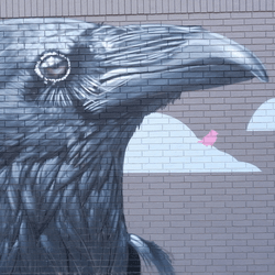 thumbnail of Gearhead Outfitters Crows Mural