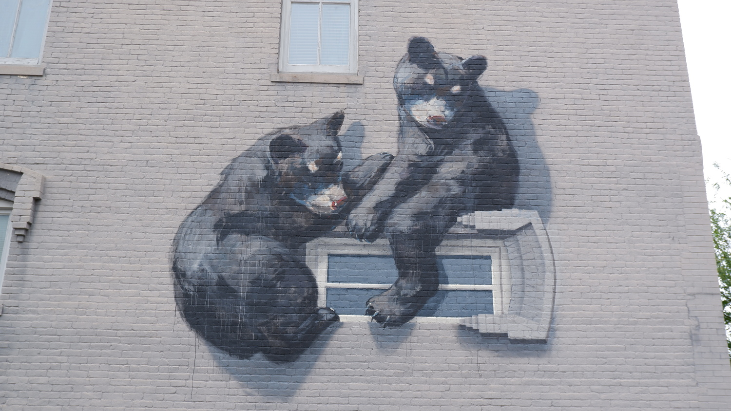 image of Bearly Legal
