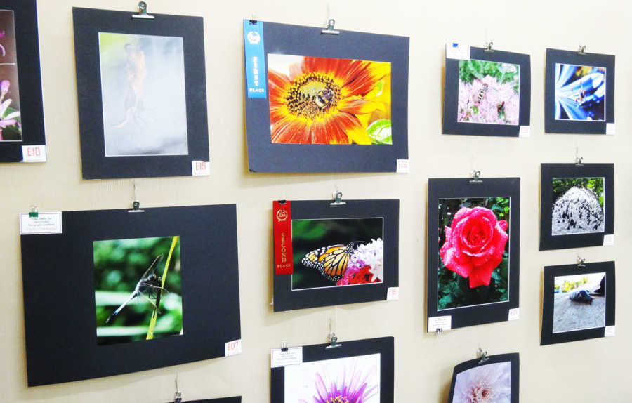 Macro entries in the 2019 Cherry Festival Exhibition.