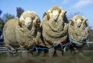 Wool Report - Week S09: