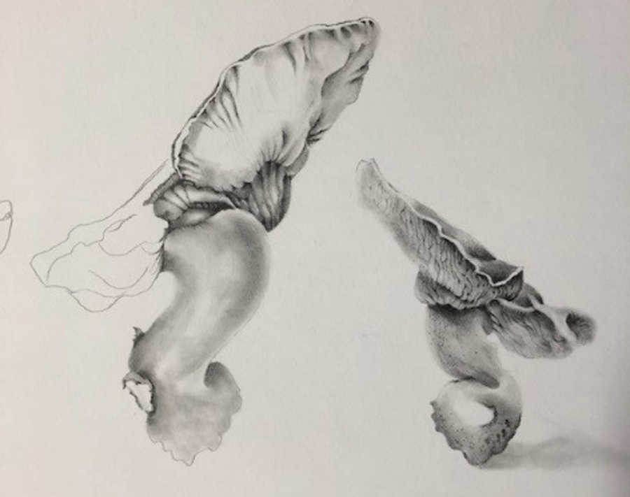 Harden Murrumburrah Arts Council presents Louise Adams Tonal Drawing