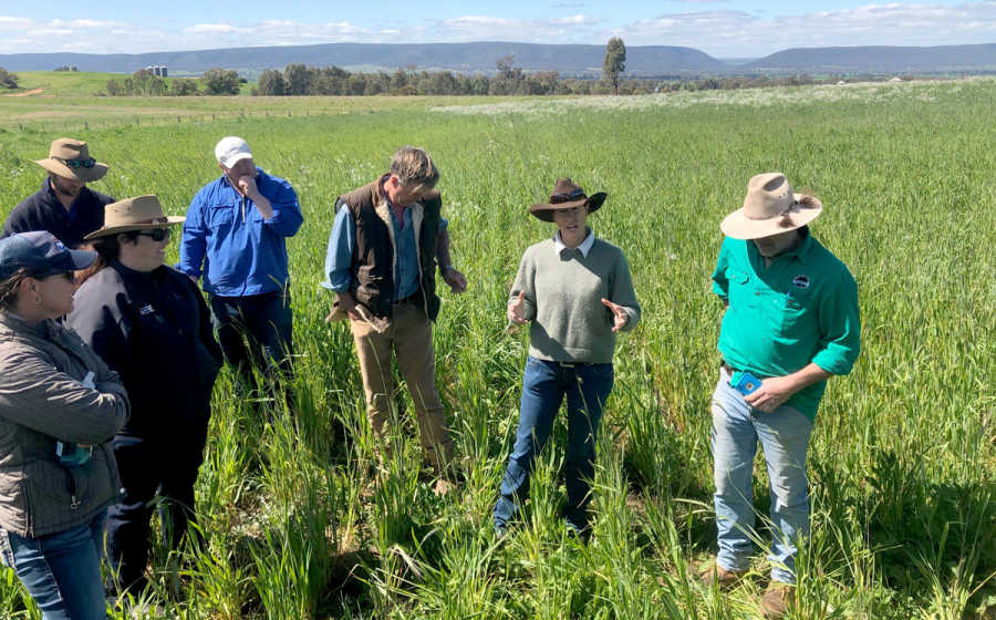 Re-Gen Grazing Group on farm meeting