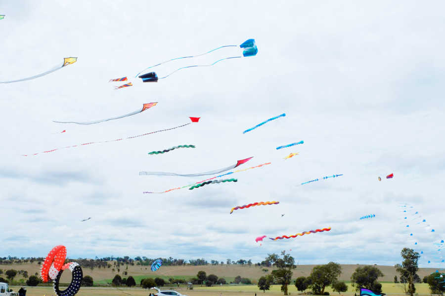 Kites in the sky at the Festival.