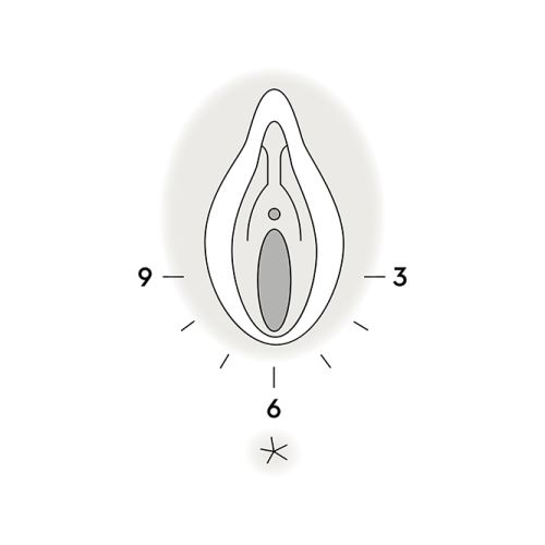 Infografik zur Dammmassage, Illustration des weiblichen Genitalbereichs