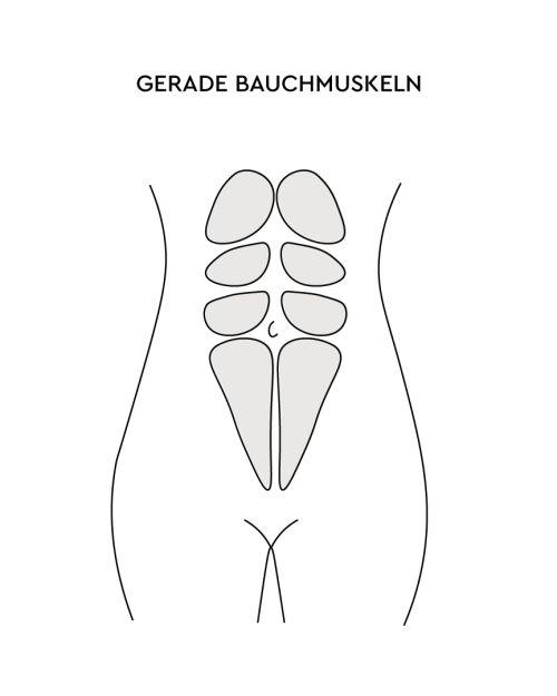 Gerade Bauchmuskeln LILLYDOO Grafik