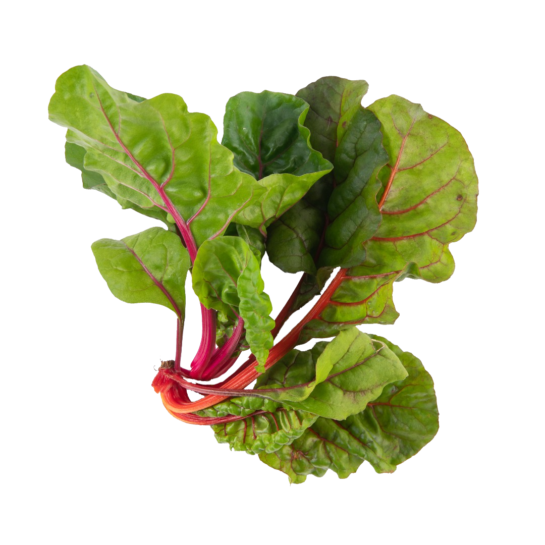 Lettuce Grow Seedling Rainbow Swiss Chard
