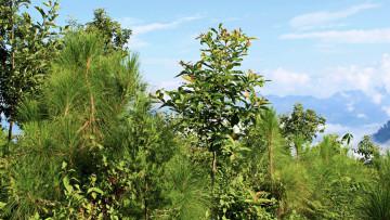 Wald in Nepal