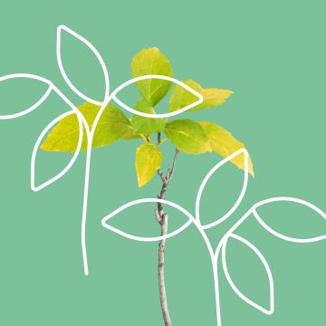 Baum Setzlinge
