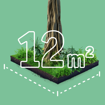12 Quadratmeter Regenwald