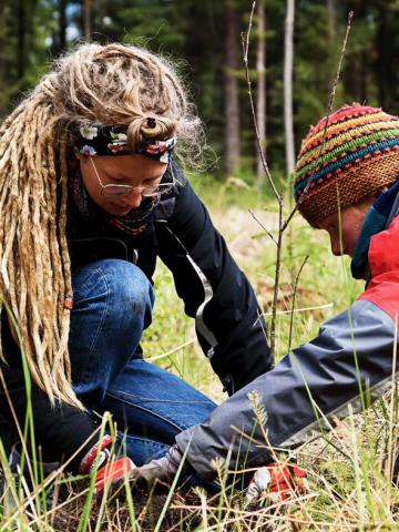 Personen pflanzen Setzlinge im Wald